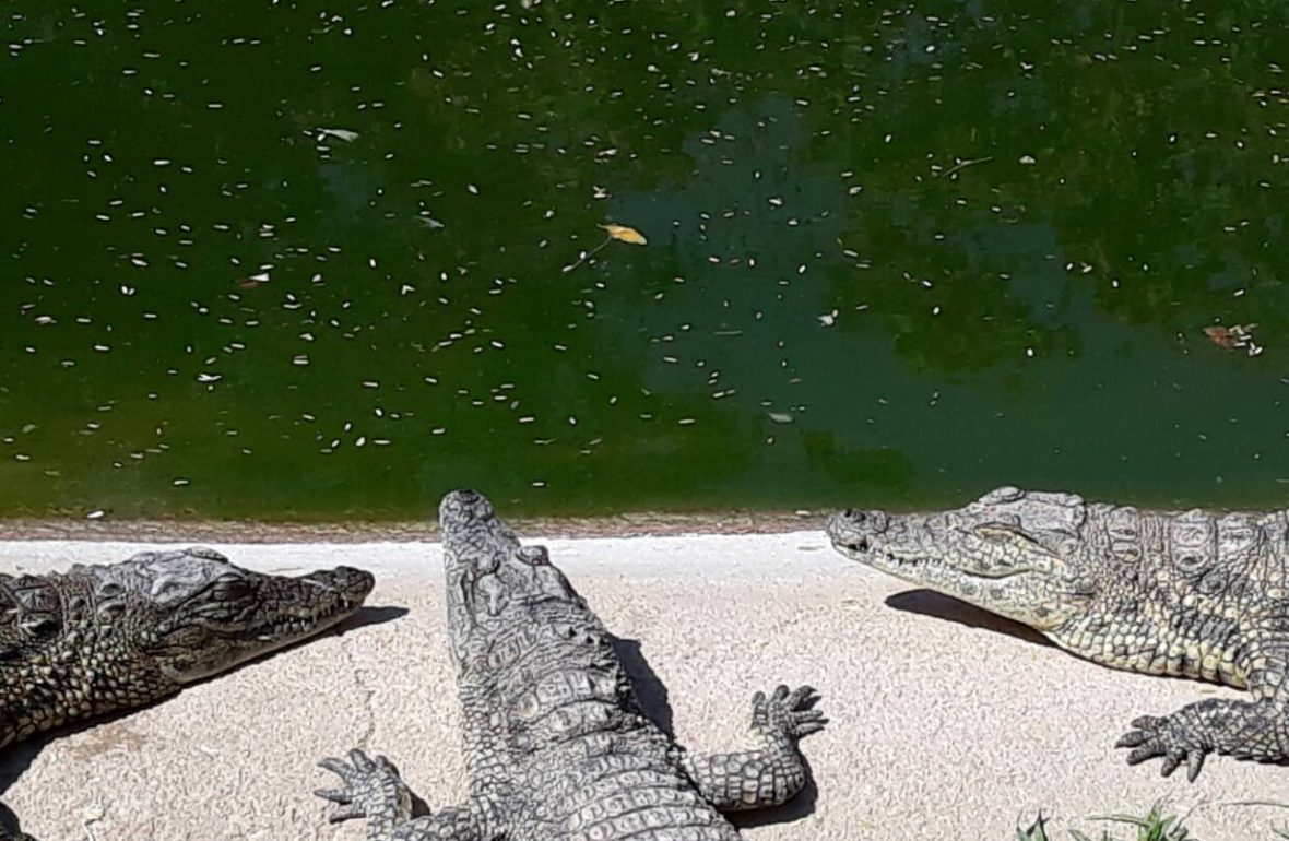 Umringt von Tieren, Crocodile Farm Otjiwarongo